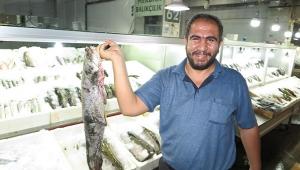 Balık fiyatları cep yakıyor ..