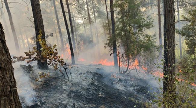 65 hektar ormanlık alan zarar gördü..