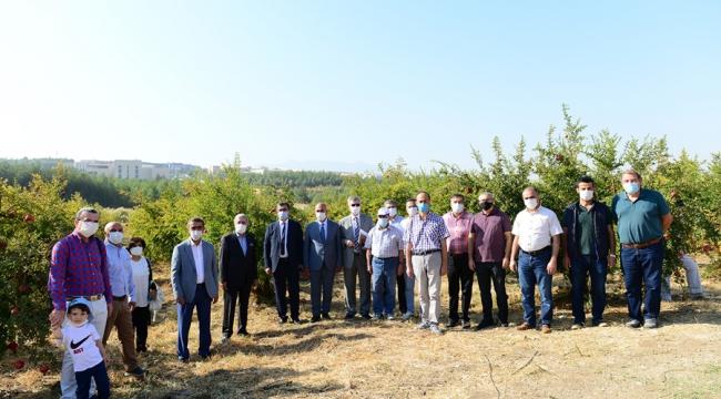 KSÜ Nar Bahçesinde Nar Günü Etkinliği Düzenlendi