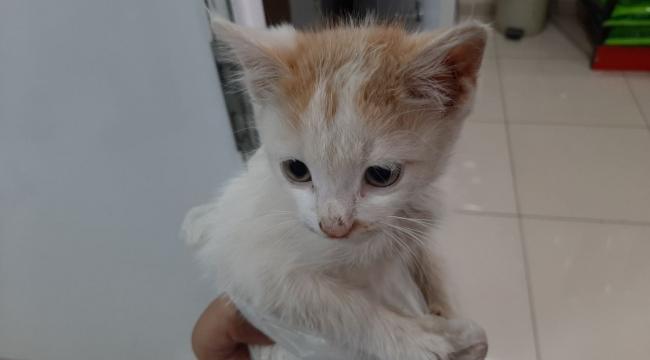 Hastalanan yavru kediye sahip çıktı