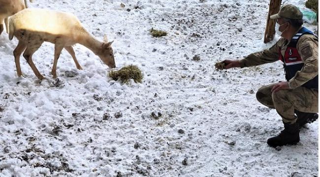 Jandarma geyikleri eliyle besledi..