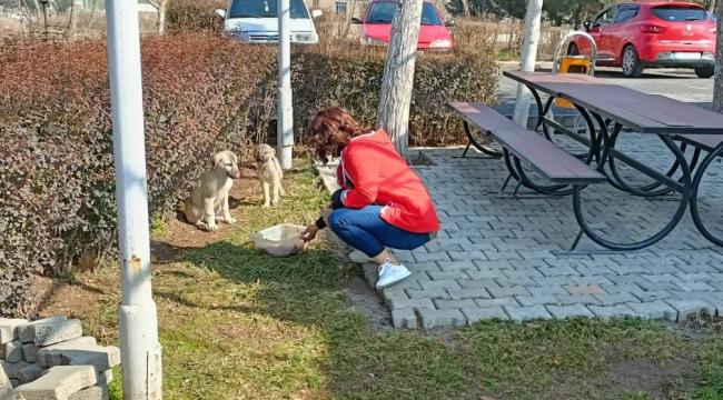 Sokak hayvanlarının ailesi oldular