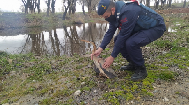 Balıkçıl Kuşunu jandarma ekiplerinin dikkati kurtardı