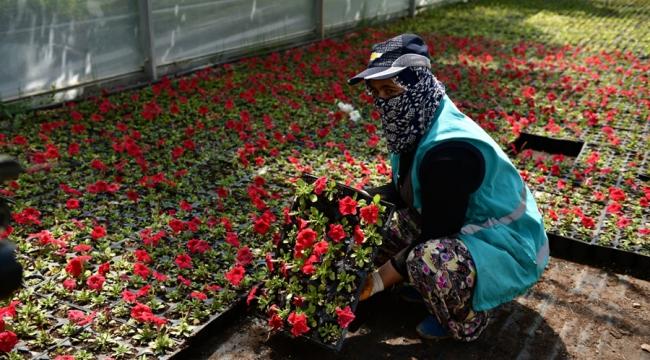 Seralarda üretilen çiçekler şehri süslemeye başladı