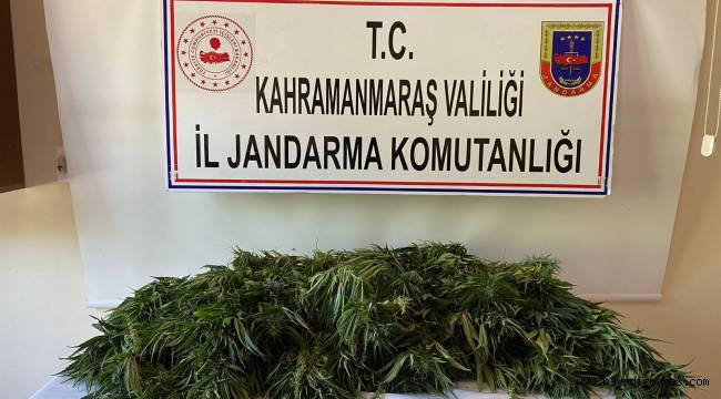 Pazarcık'ta 204 kenevir ele geçirildi