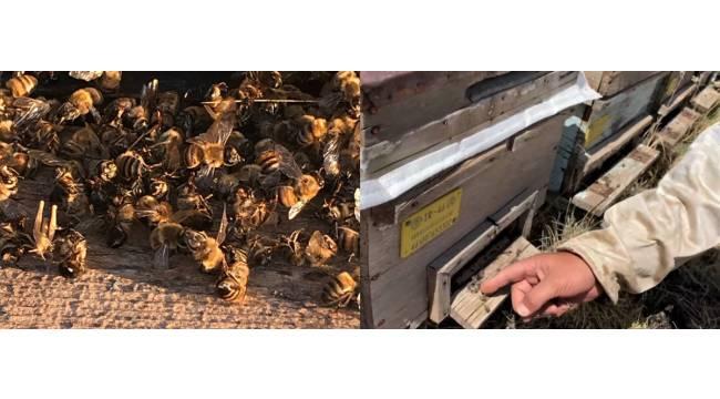 Kahramanmaraş'ta binlerce bal arısı telef oldu
