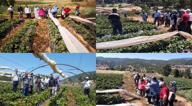 Tarım Müdürlüğünden Çiftçi İnceleme Gezisi