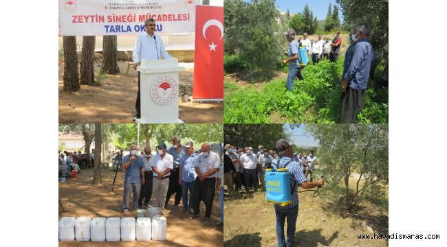 Andırın'da Zeytin Sineği İle Toplu Mücadele Tarla Okulu Programı Gerçekleştirildi