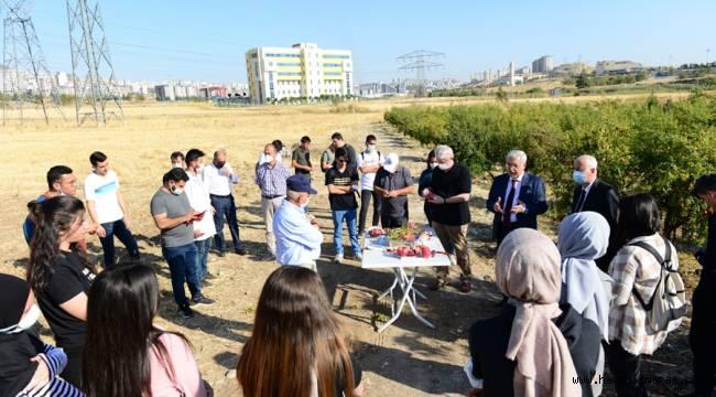 KSÜ'de Uygulamalı Nar Hasadı eğitimi verildi